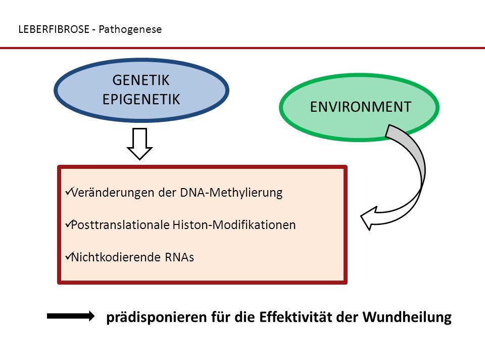 LEBERFIBROSE - Pathogenese