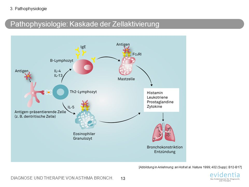 Pathophysiologie: Kaskade der Zellaktivierung