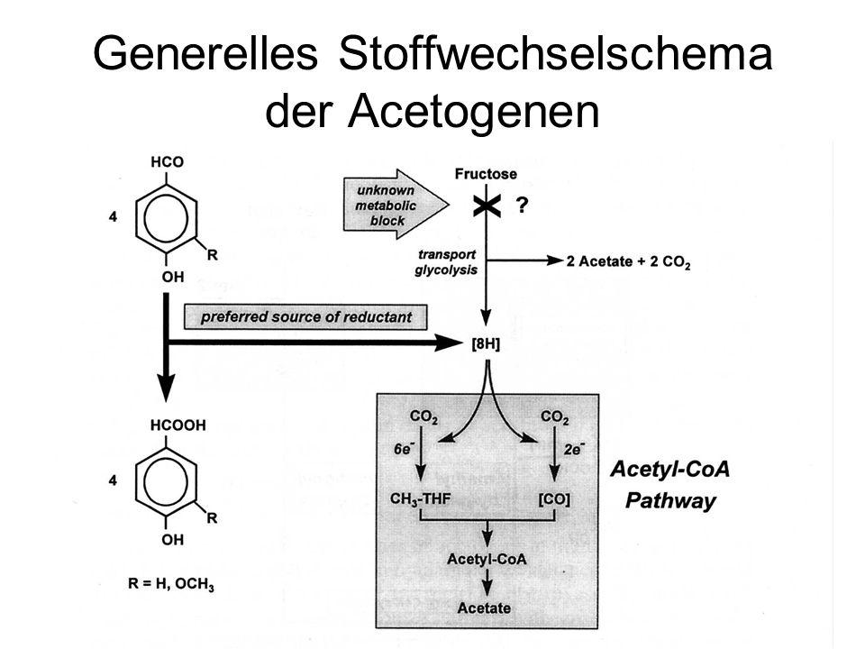 Generelles Stoffwechselschema der Acetogenen
