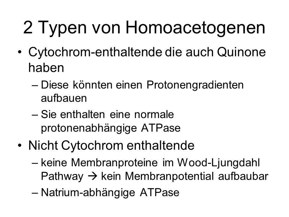 2 Typen von Homoacetogenen
