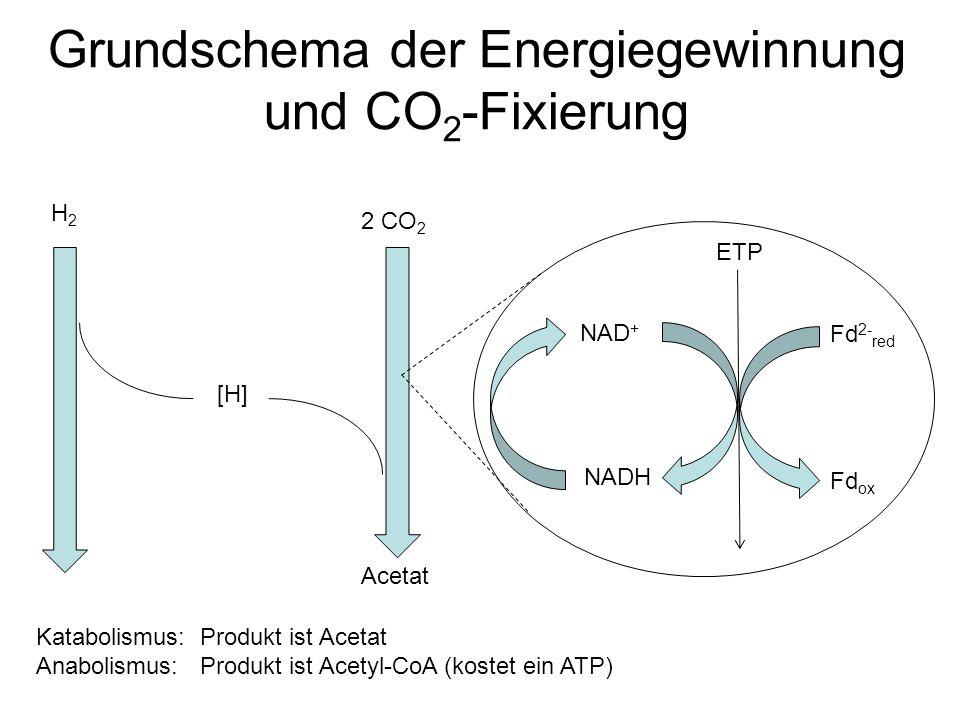 Grundschema der Energiegewinnung und CO2-Fixierung