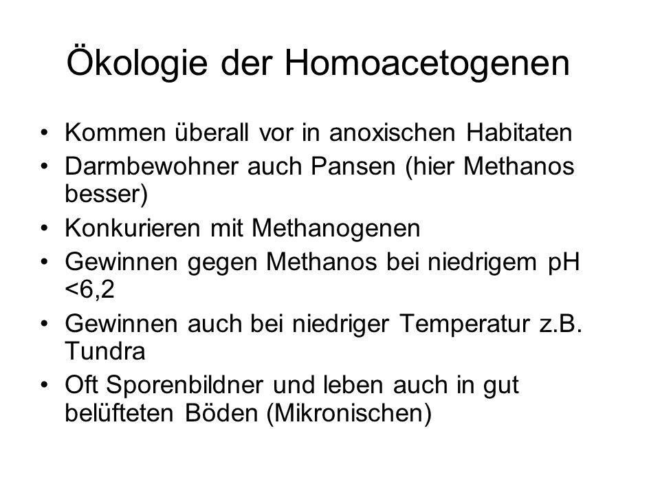 Ökologie der Homoacetogenen