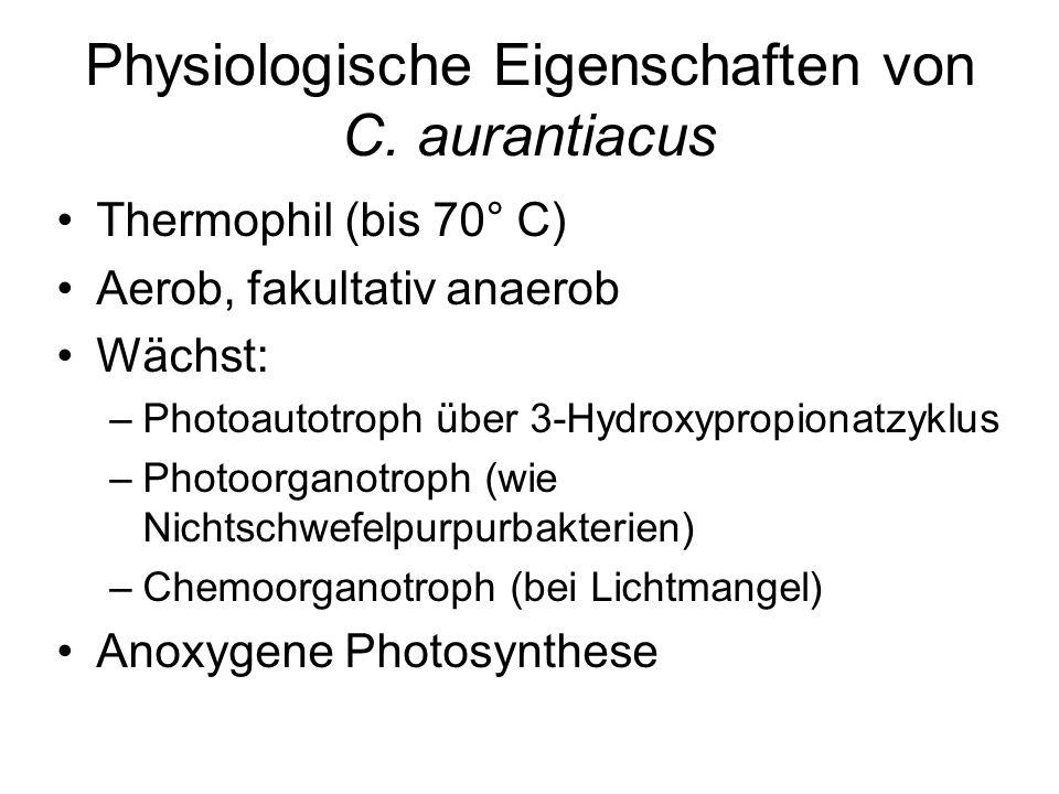 Physiologische Eigenschaften von C. aurantiacus