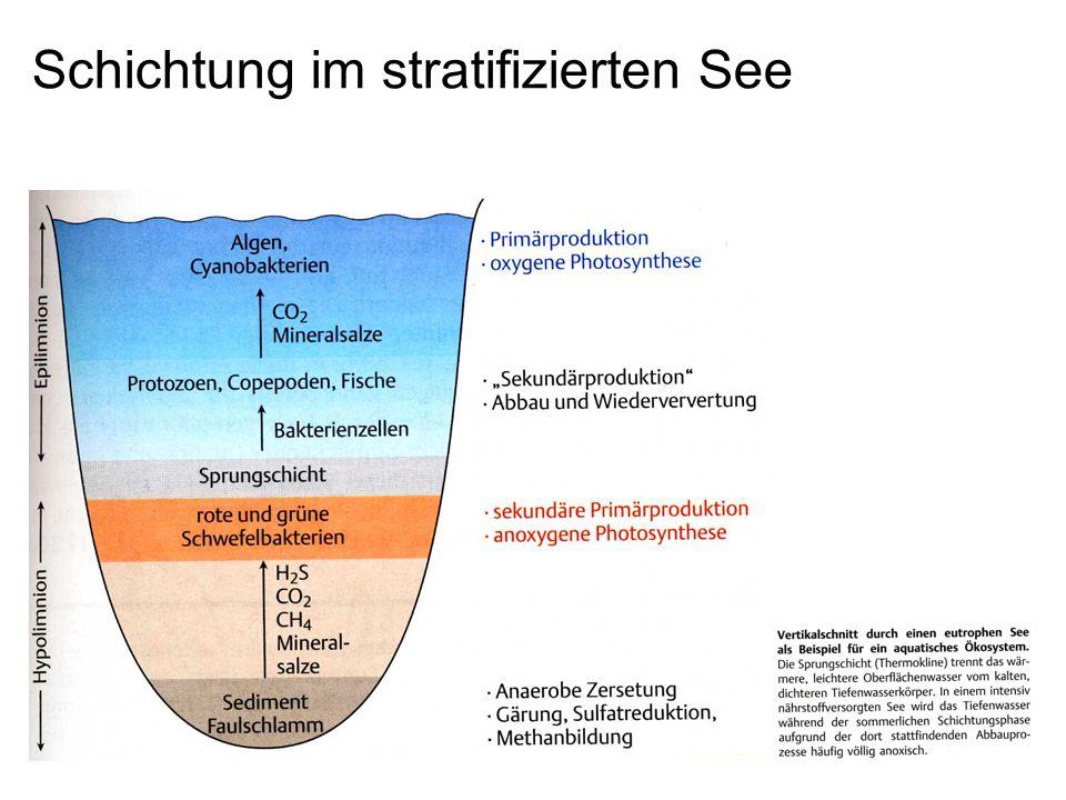 Schichtung im stratifizierten See