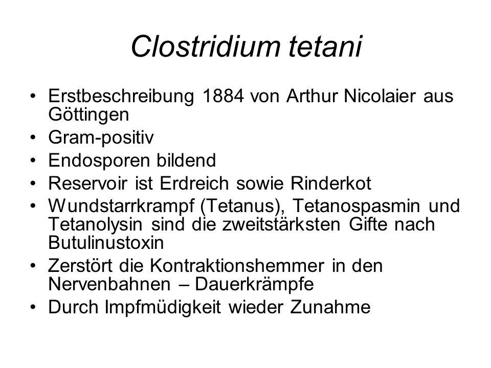 Clostridium tetani Erstbeschreibung 1884 von Arthur Nicolaier aus Göttingen. Gram-positiv. Endosporen bildend.