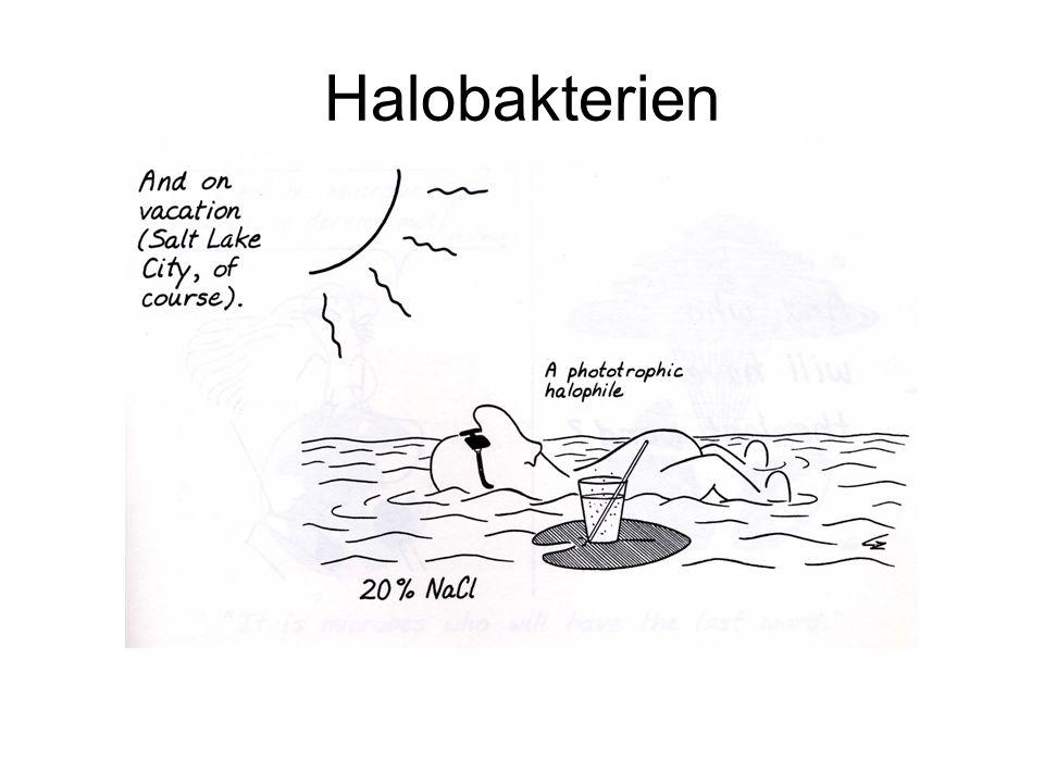 Halobakterien