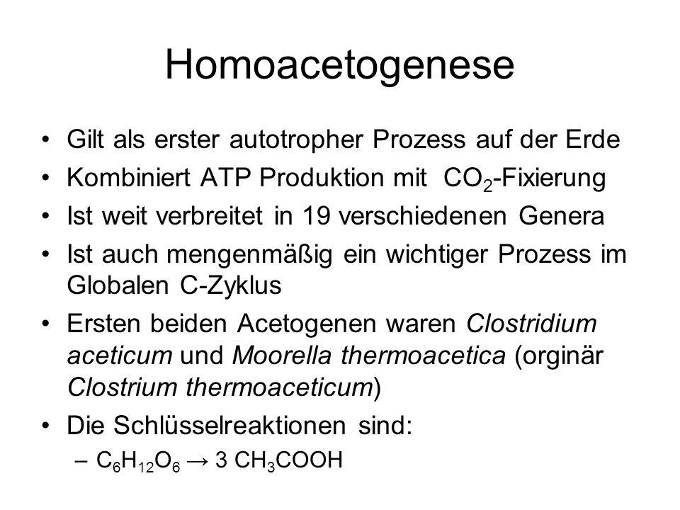 Homoacetogenese Gilt als erster autotropher Prozess auf der Erde