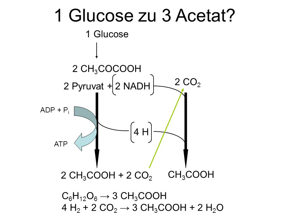 1 Glucose zu 3 Acetat 1 Glucose 2 CH3COCOOH 2 Pyruvat + 2 NADH 2 CO2