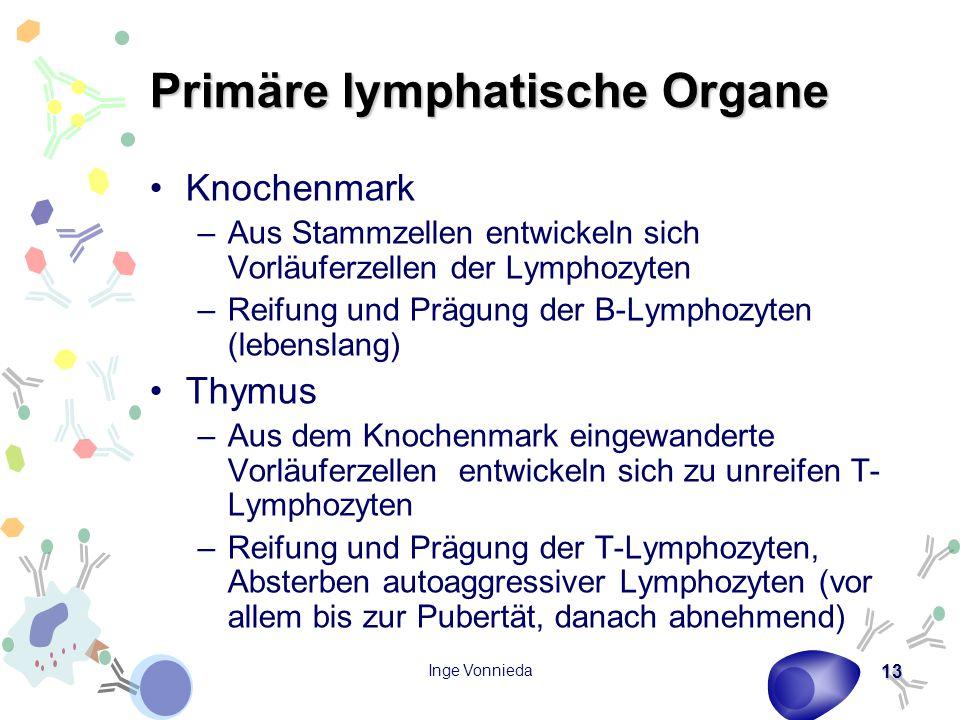 Primäre lymphatische Organe