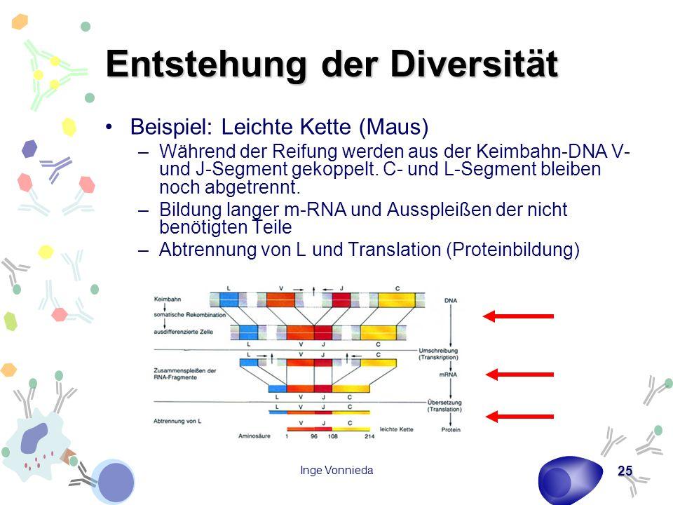 Entstehung der Diversität