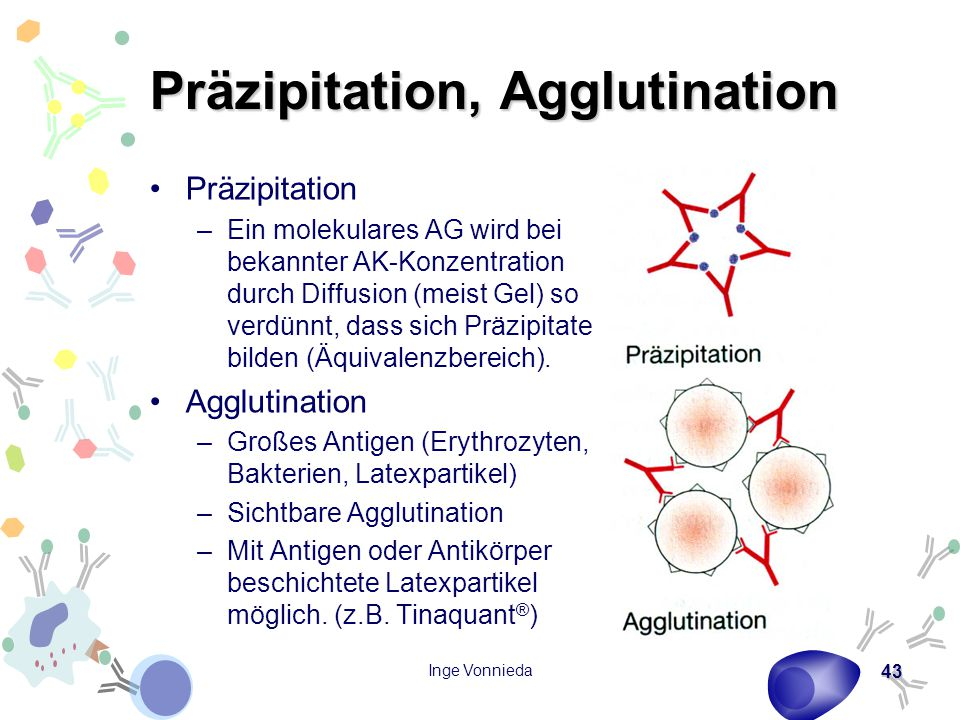 Präzipitation, Agglutination