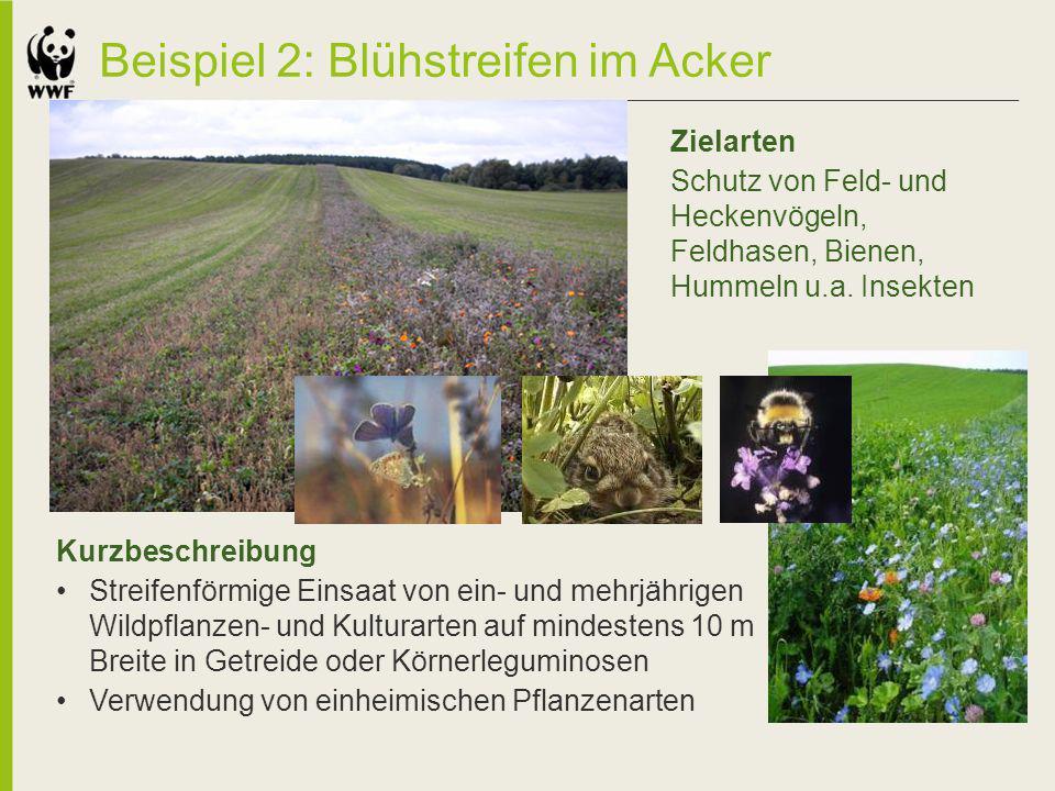 Beispiel 2: Blühstreifen im Acker