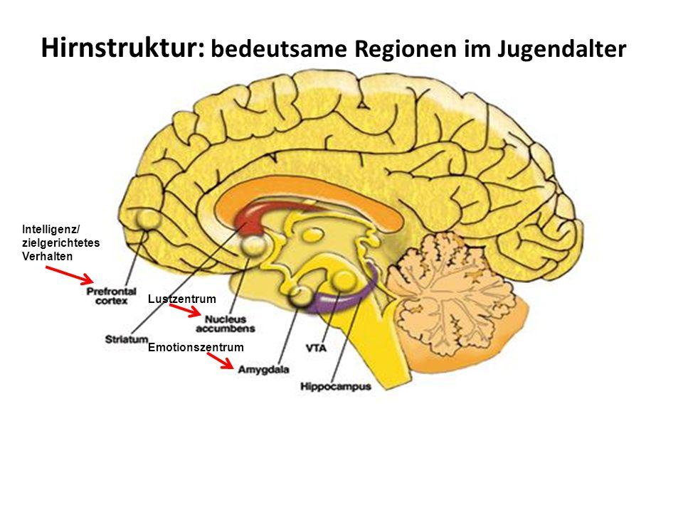 Hirnstruktur: bedeutsame Regionen im Jugendalter