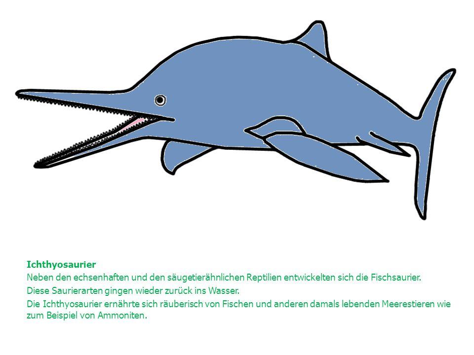 Ichthyosaurier Neben den echsenhaften und den säugetierähnlichen Reptilien entwickelten sich die Fischsaurier.