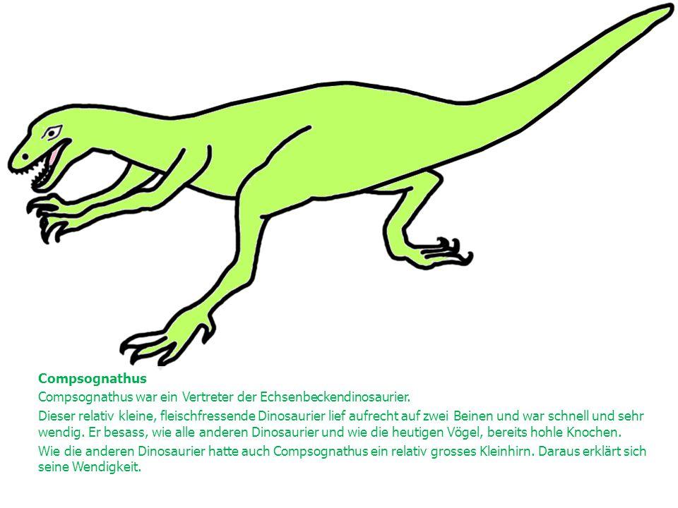 Compsognathus Compsognathus war ein Vertreter der Echsenbeckendinosaurier.