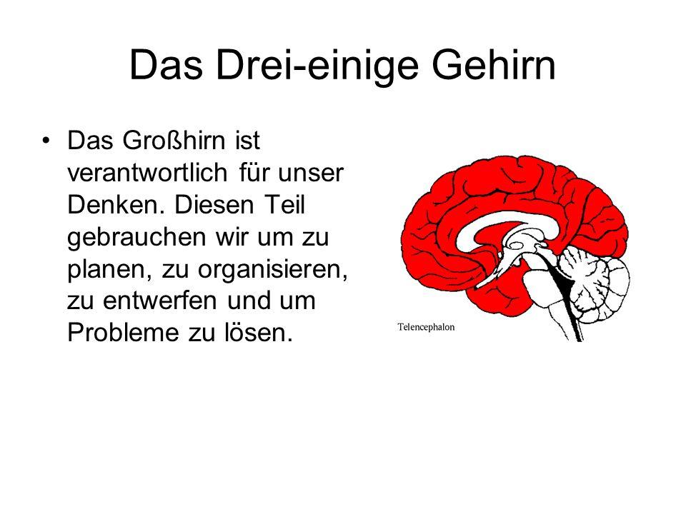 Das Drei-einige Gehirn