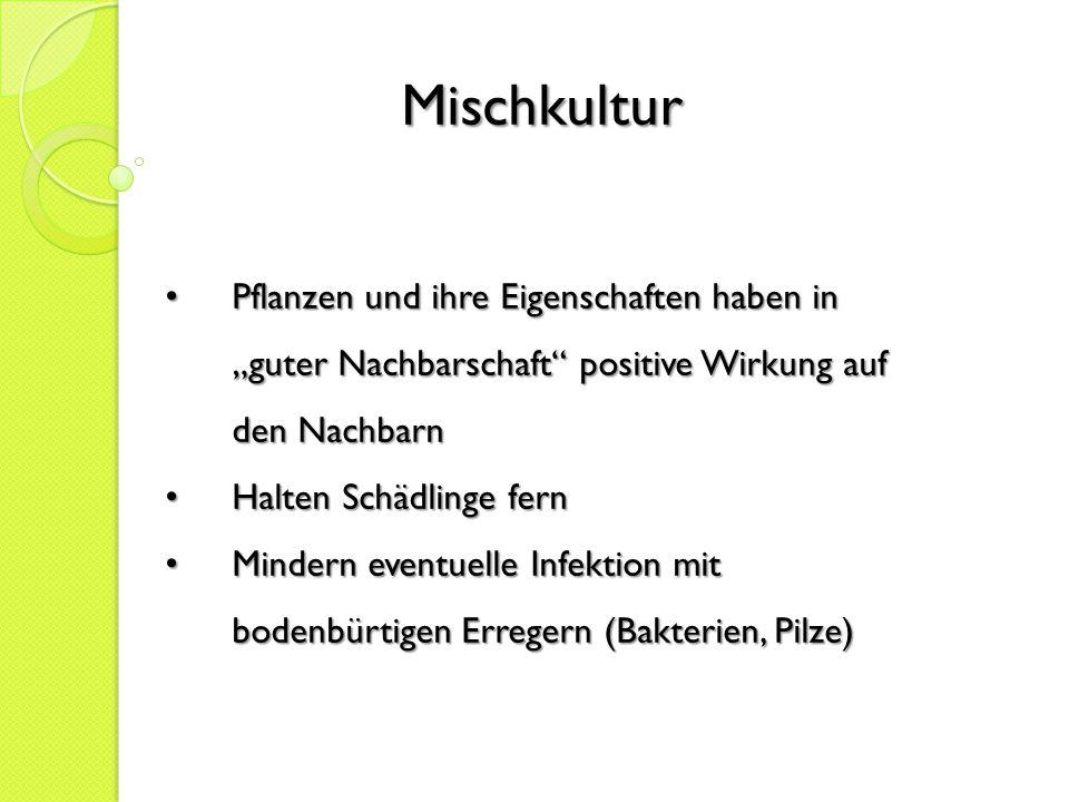 """Mischkultur Pflanzen und ihre Eigenschaften haben in """"guter Nachbarschaft positive Wirkung auf den Nachbarn."""