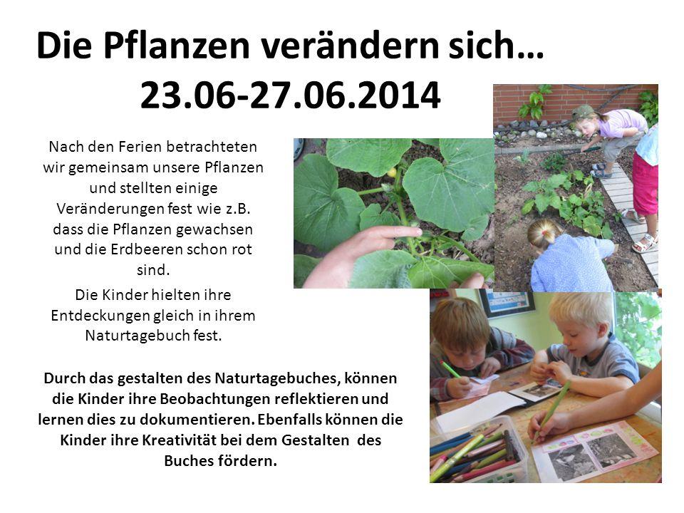 Die Pflanzen verändern sich… 23.06-27.06.2014