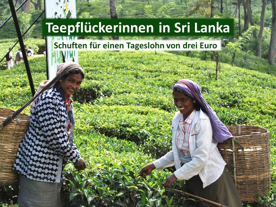 Teepflückerinnen in Sri Lanka