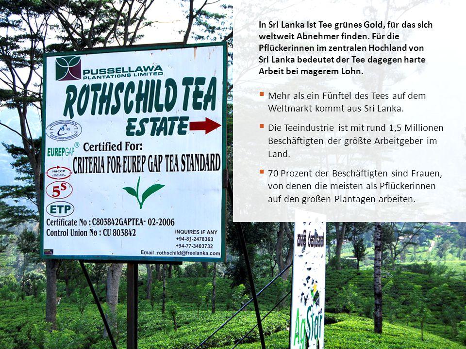 Mehr als ein Fünftel des Tees auf dem Weltmarkt kommt aus Sri Lanka.