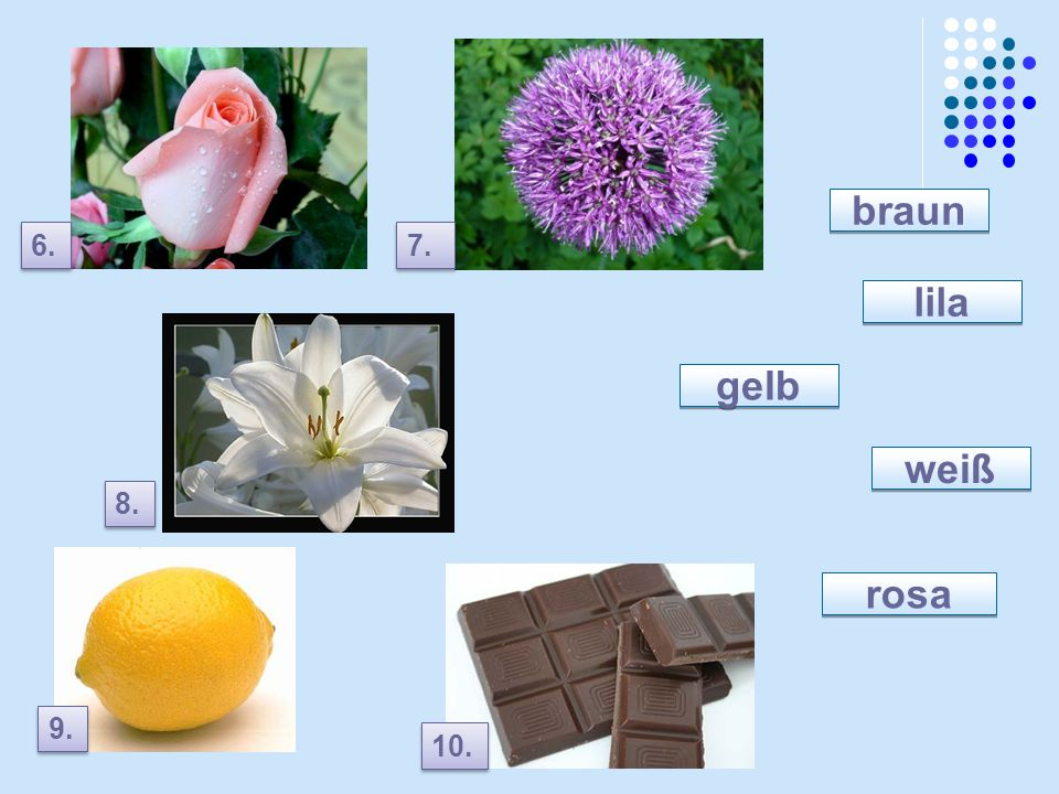 braun lila gelb weiß rosa
