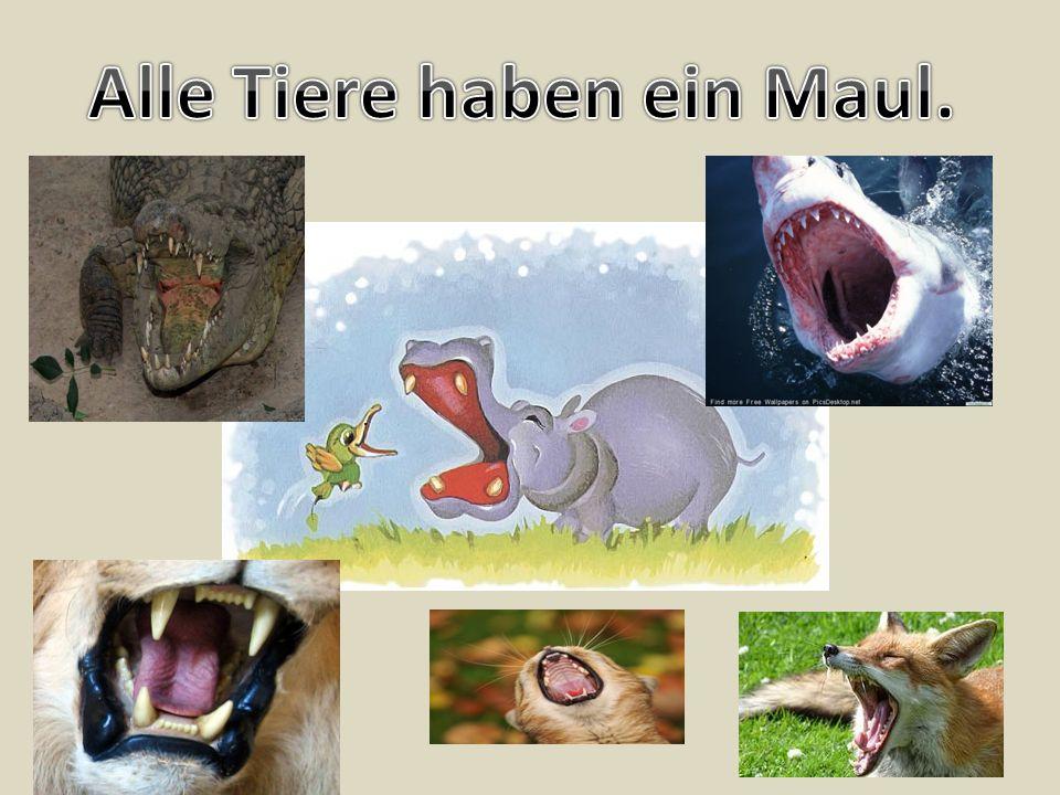 Alle Tiere haben ein Maul.