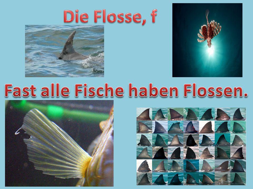 Fast alle Fische haben Flossen.