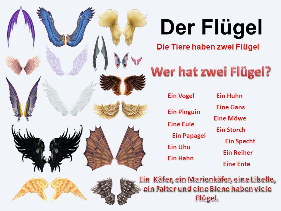 Der Flügel Wer hat zwei Flügel Die Tiere haben zwei Flügel