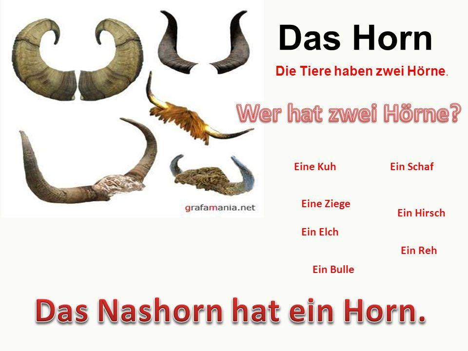 Das Nashorn hat ein Horn.