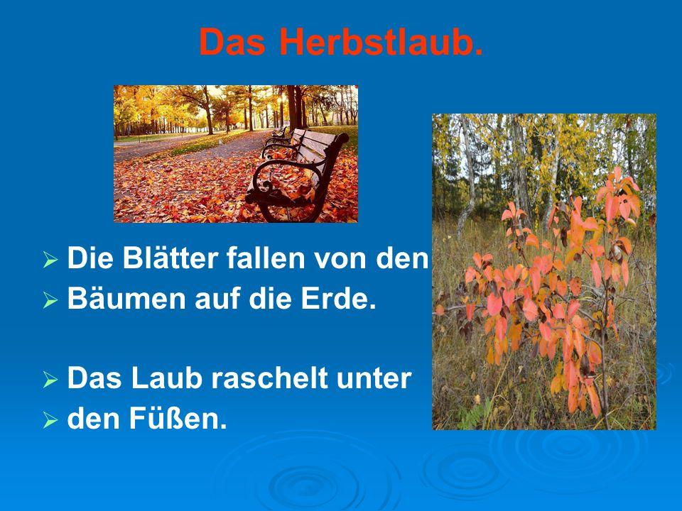 Das Herbstlaub. Die Blätter fallen von den Bäumen auf die Erde.
