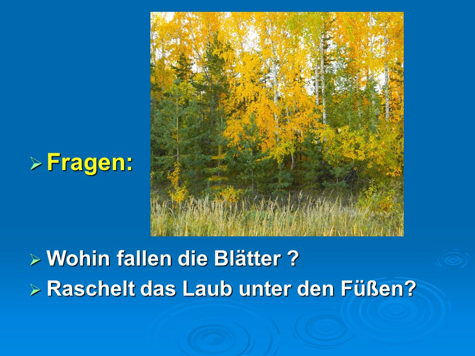 Fragen: Wohin fallen die Blätter Raschelt das Laub unter den Füßen