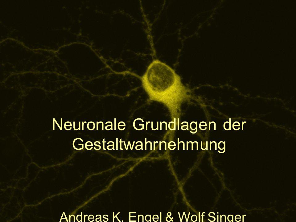 Neuronale Grundlagen der Gestaltwahrnehmung