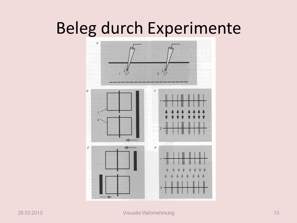 Beleg durch Experimente