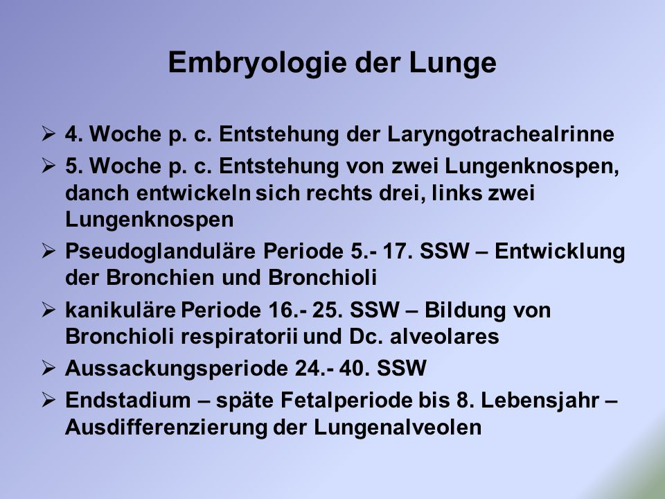 Embryologie der Lunge 4. Woche p. c. Entstehung der Laryngotrachealrinne.