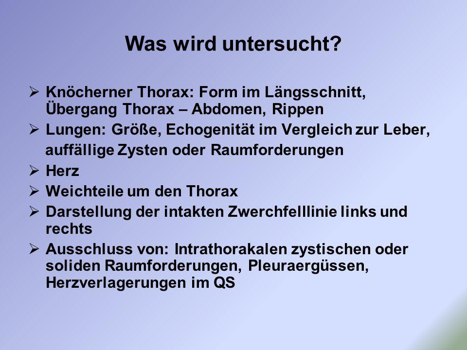 Was wird untersucht Knöcherner Thorax: Form im Längsschnitt, Übergang Thorax – Abdomen, Rippen. Lungen: Größe, Echogenität im Vergleich zur Leber,