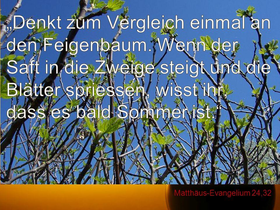 """""""Denkt zum Vergleich einmal an den Feigenbaum"""