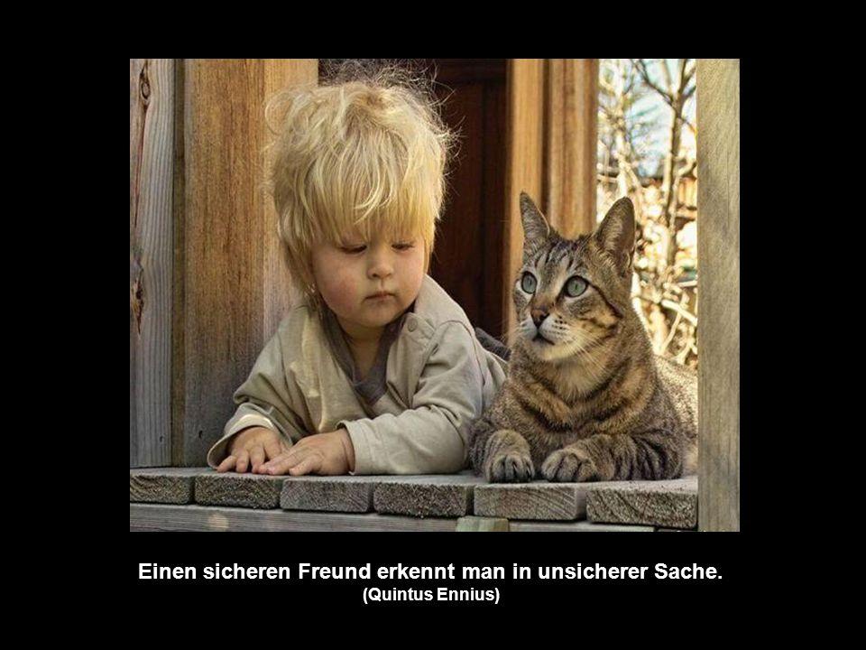 Einen sicheren Freund erkennt man in unsicherer Sache. (Quintus Ennius)