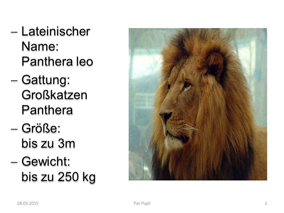 Lateinischer Name: Panthera leo