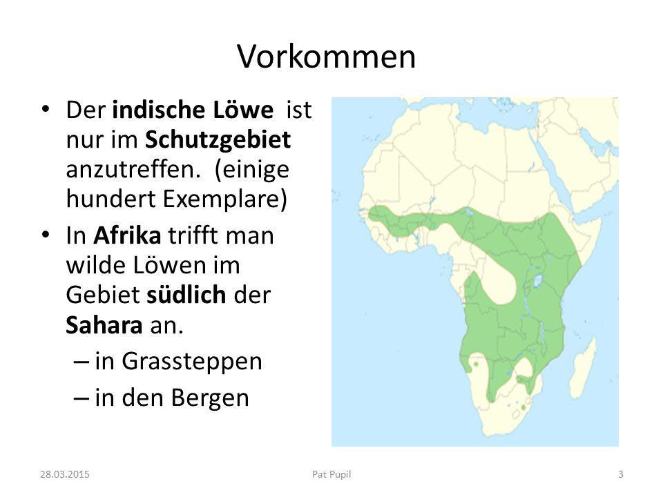 Vorkommen Der indische Löwe ist nur im Schutzgebiet anzutreffen. (einige hundert Exemplare)