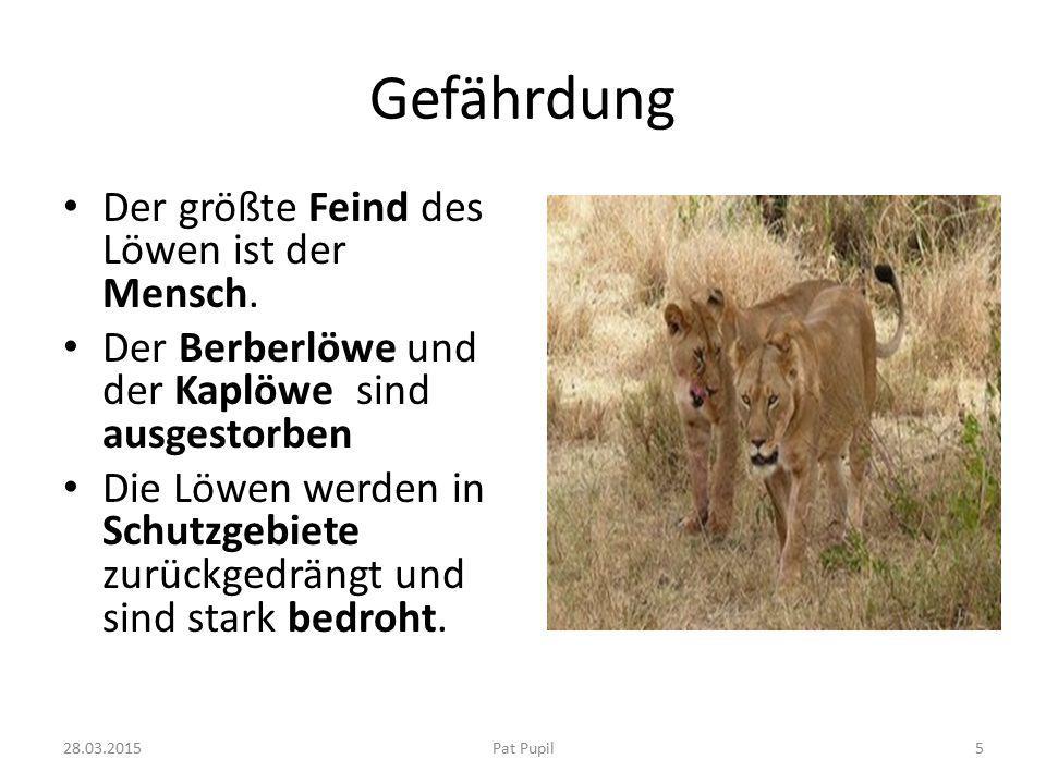 Gefährdung Der größte Feind des Löwen ist der Mensch.
