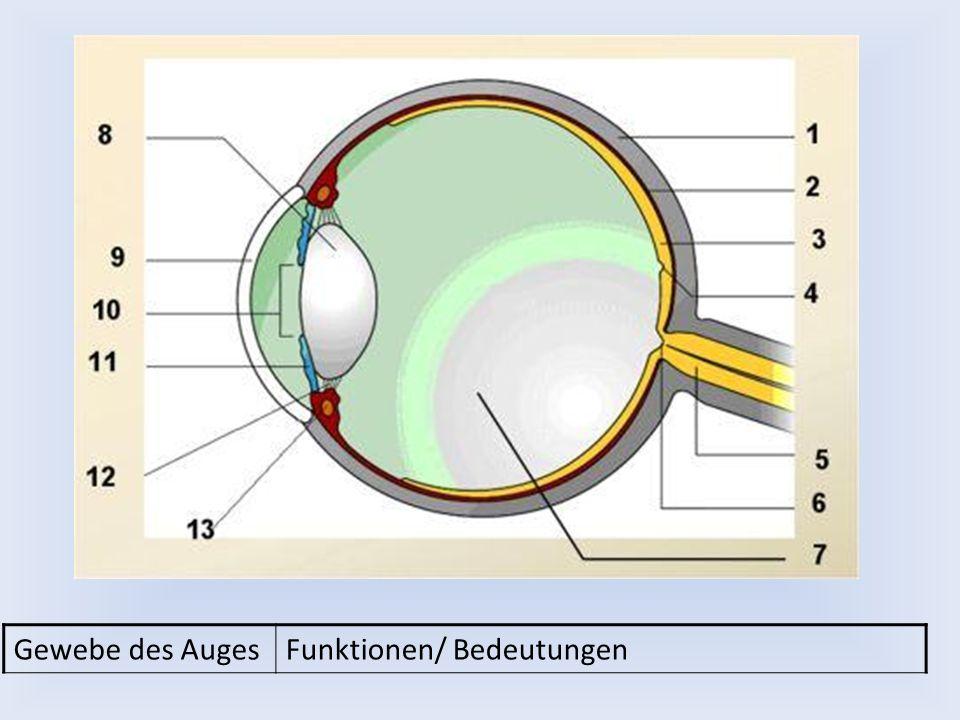 Gewebe des Auges Funktionen/ Bedeutungen