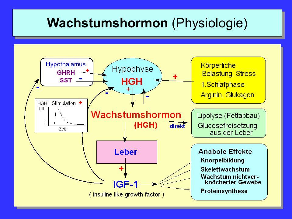 Wachstumshormon (Physiologie)