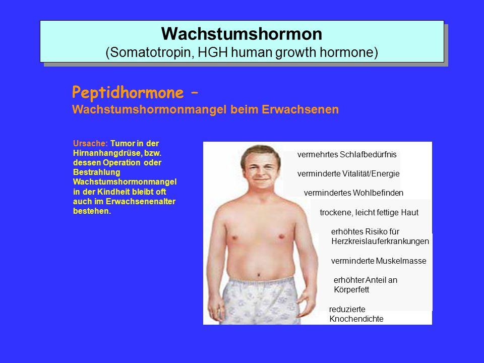 Wachstumshormon (Somatotropin, HGH human growth hormone)