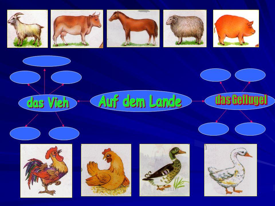 Die Ziege Die Kuh Der Hahn Das Huhn Die Ente Die Gans Das Schwein