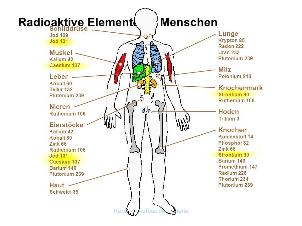 Radioaktive Elemente im Menschen