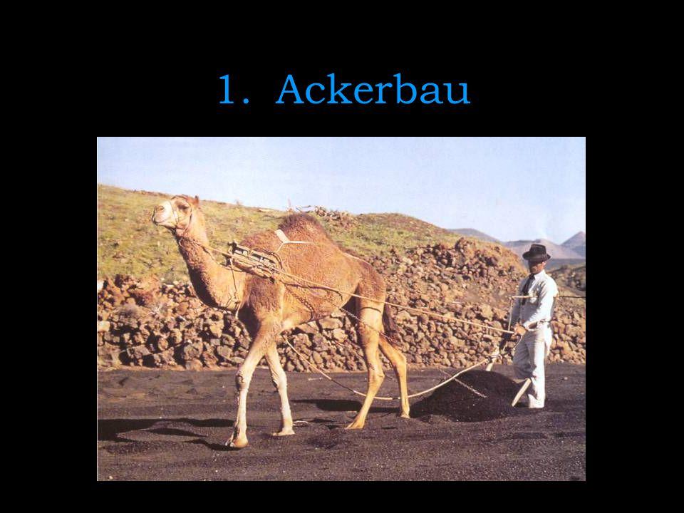 Ackerbau