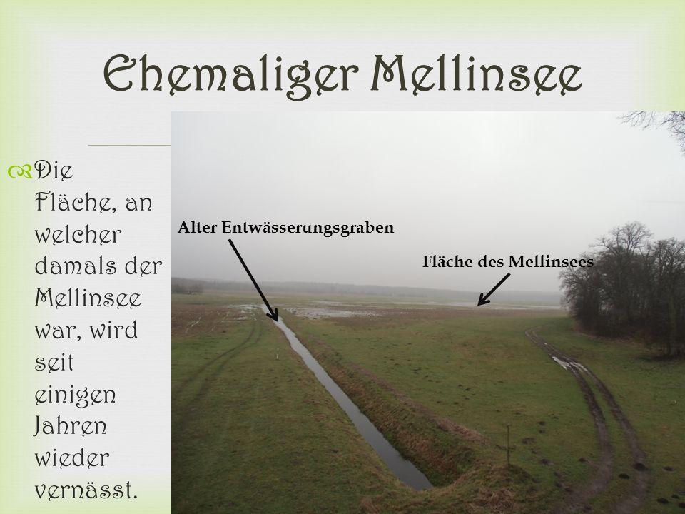 Ehemaliger Mellinsee Die Fläche, an welcher damals der Mellinsee war, wird seit einigen Jahren wieder vernässt.