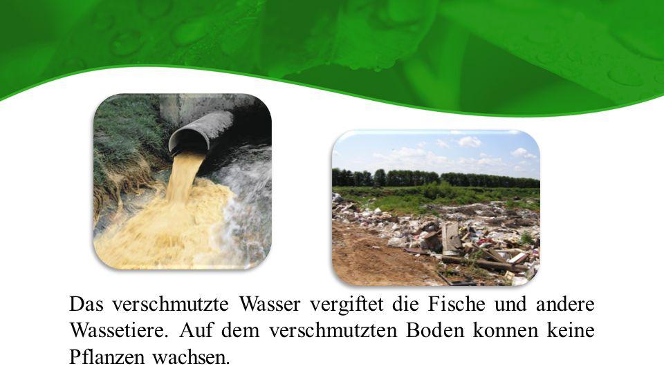 Das verschmutzte Wasser vergiftet die Fische und andere Wassetiere