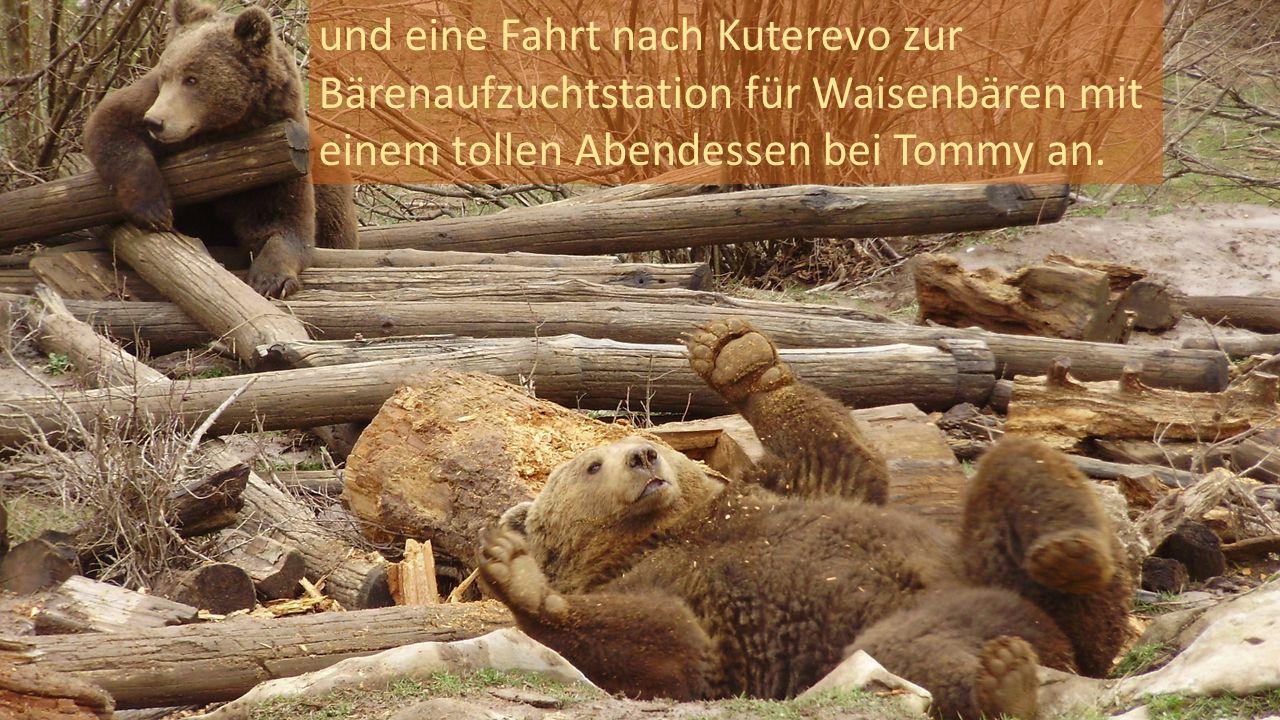 und eine Fahrt nach Kuterevo zur Bärenaufzuchtstation für Waisenbären mit einem tollen Abendessen bei Tommy an.