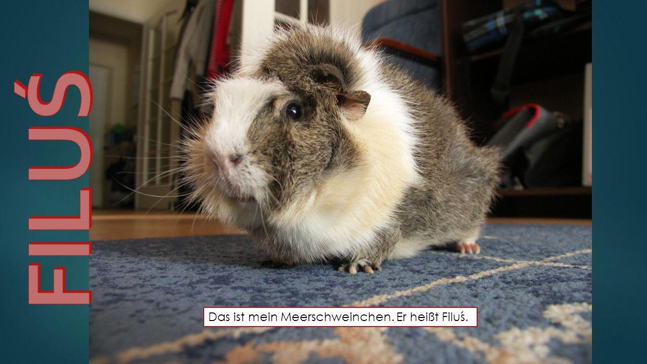 FILUŚ Das ist mein Meerschweinchen. Er heißt Filuś.